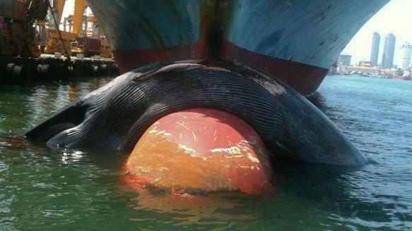 Sri Lankan Whale Protection Area Proposed