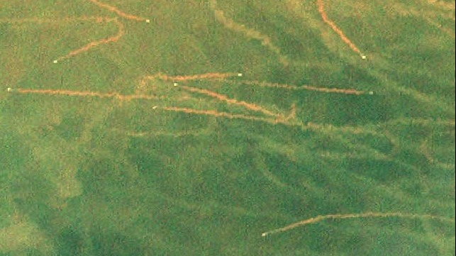 Satellite image of trawler mud trails off the Louisiana coast