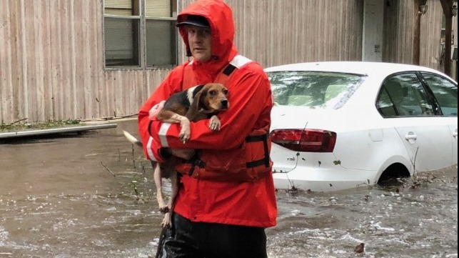 A member of Coast Guard Shallow-Water Response Boat Team 3 rescues pets stranded by floodwaters caused by Hurricane Florence in North Carolina, September 16, 2018.