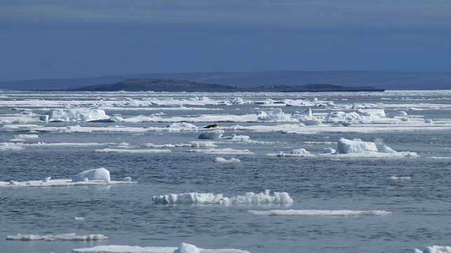 Sea ice along the east coast of Banks Island in the western Canadian Arctic. Photo credit: UVic researcher William Halliday.